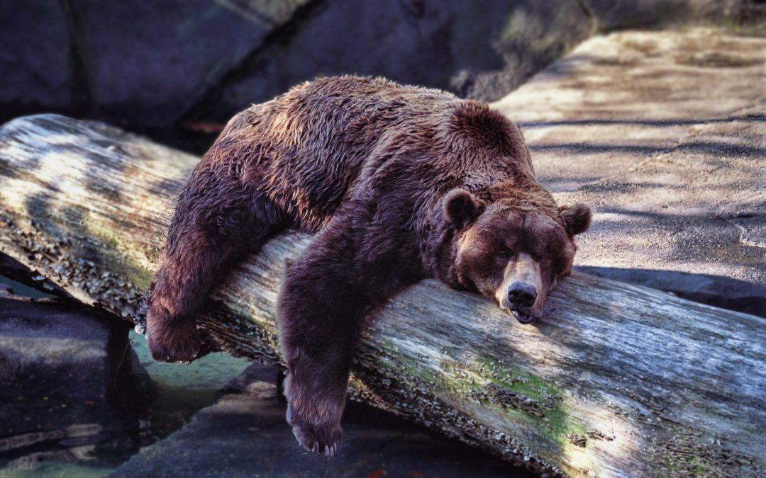 Pour une hibernation CONSCIENTE !