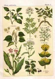 Aromathérapie à Shiatsu Lyon