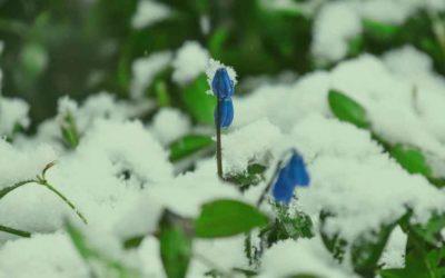 Le printemps en Médecine Chinoise : le réveil sous la glace.